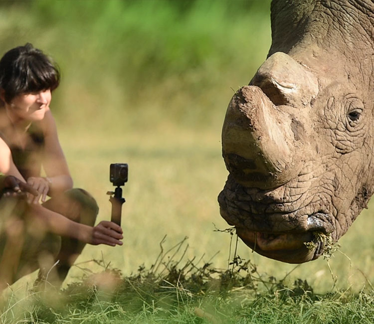 Nikon Ambassador Ami Vitale uses a KeyMission 360 with accessories to film a rhino