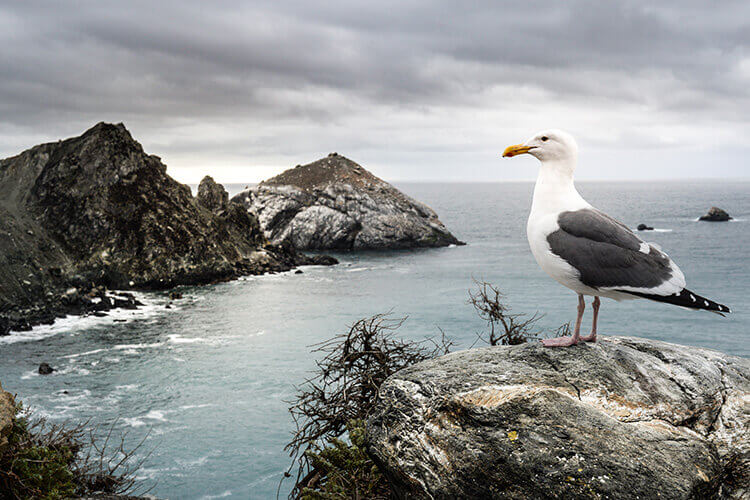 A seagull stands on a rock overlooking the ocean