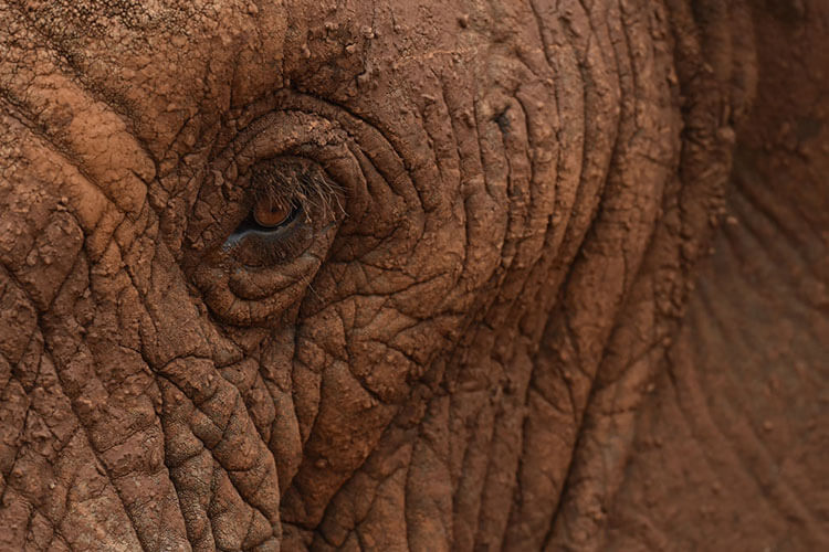 A close up of an elephant's eye and details of its rough skin