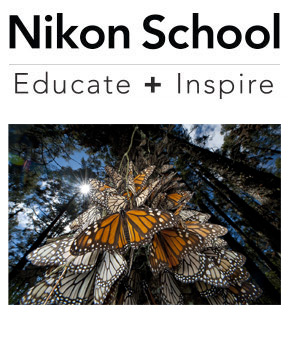 Butterflies photo taken by Joel Sartore, Nikon Ambassador and Nikon School logo