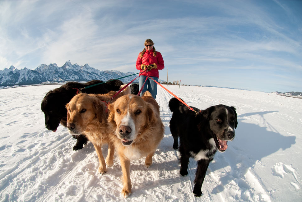 Jeff Diener Photo Of A Woman Walking Several Dogs In The Snow