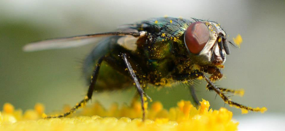 Nikon Macro Photography Tips: Photographing Insects & Small