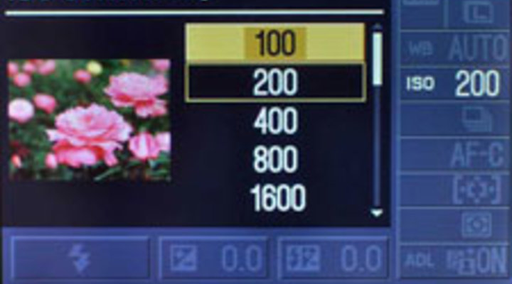 Iso Meaning Photography >> What Is Iso Sensitivity Understanding Iso From Nikon