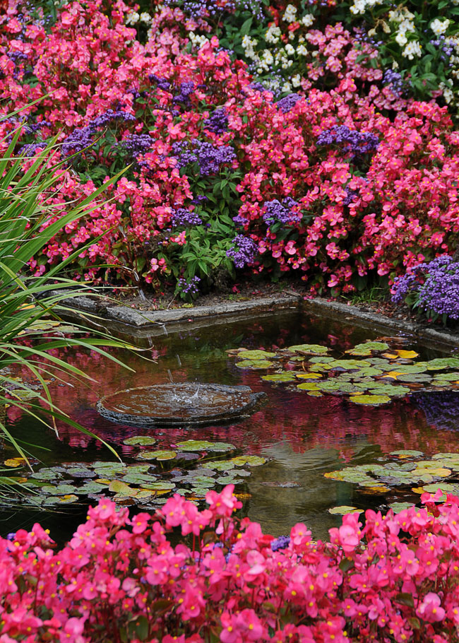 cindy dyer photo of garden and pond