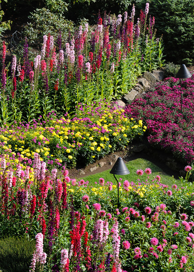 Cindy Dyer Photo Of Garden Rows Flowers