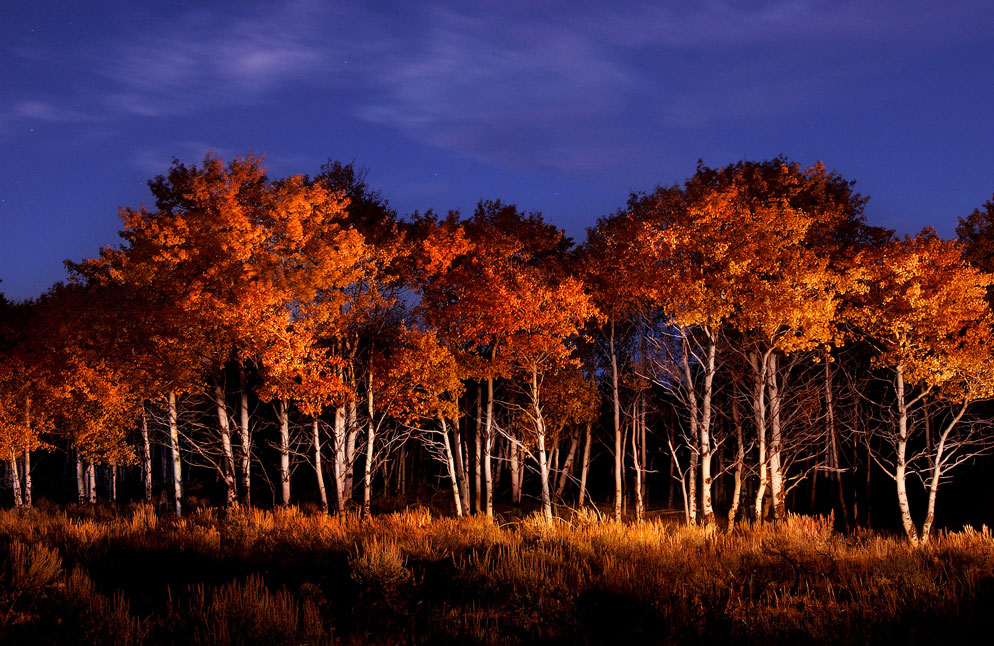 Lighting in photography light painting more nikon from nikon photo of aspens by dave black aloadofball Image collections