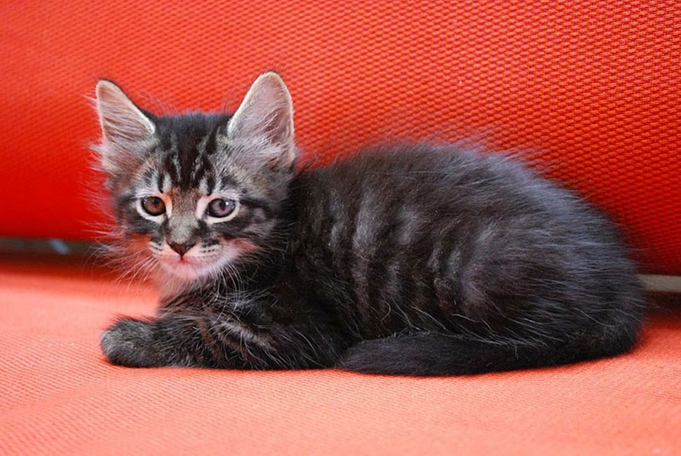 Fotografía de gatos: aprenda a tomar fotos sensacionales de su gato ...