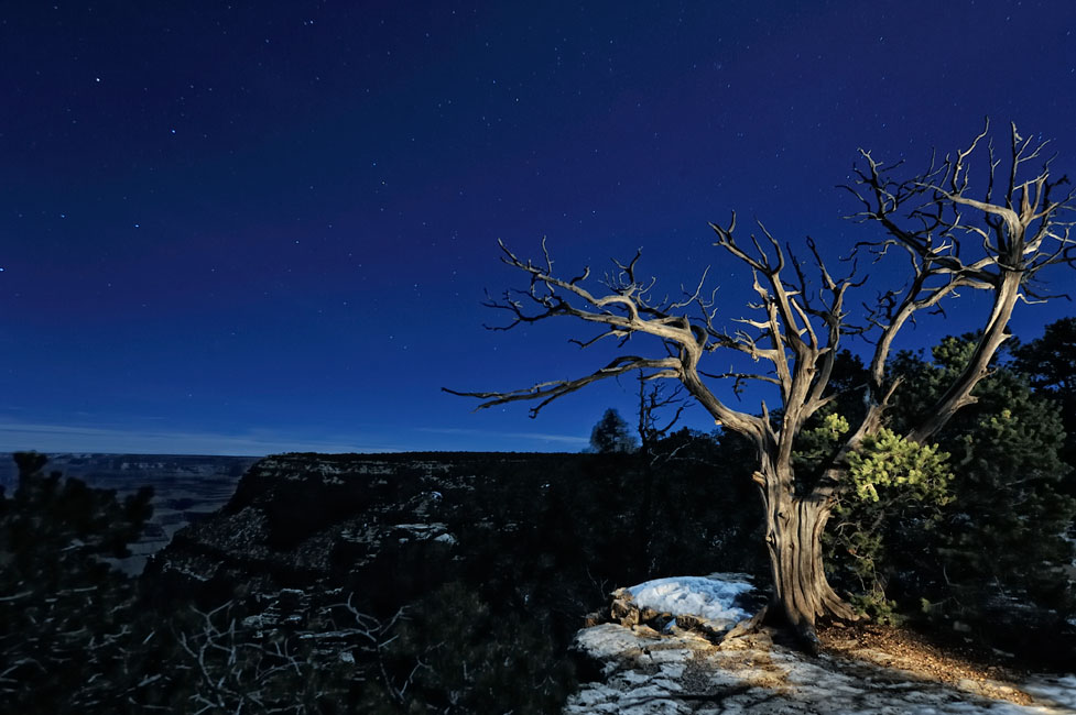 Diana Robinson Photo Of A Tree On The Edge South Rim Grand