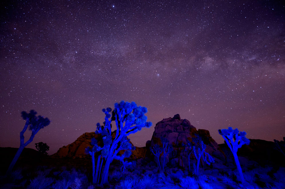 Pete Saloutos Photo Of Blue Gelled Trees And Night Sky