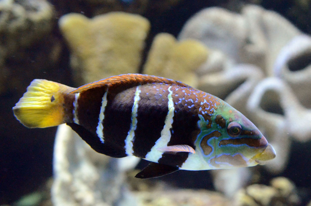 aquarium photography how to take great aquarium photos nikon