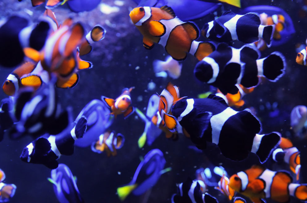 Aquarium Photography How To Take Great Aquarium Photos Nikon