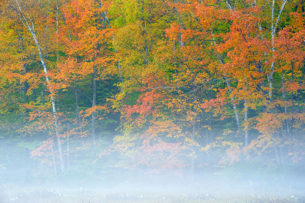 Rod Planck photo of autumn colored trees and fog