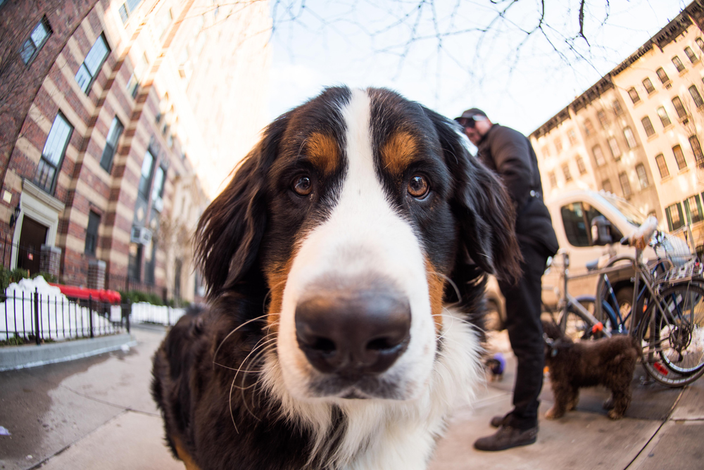 How a Nikon D750 Helps Create and Sustain an Internet Sensation for The Dogist from Nikon