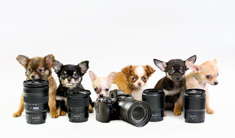 Puppy Love: One Photographer's Quest to Capture the Perfect Pairing of Cameras & Canines from Nikon