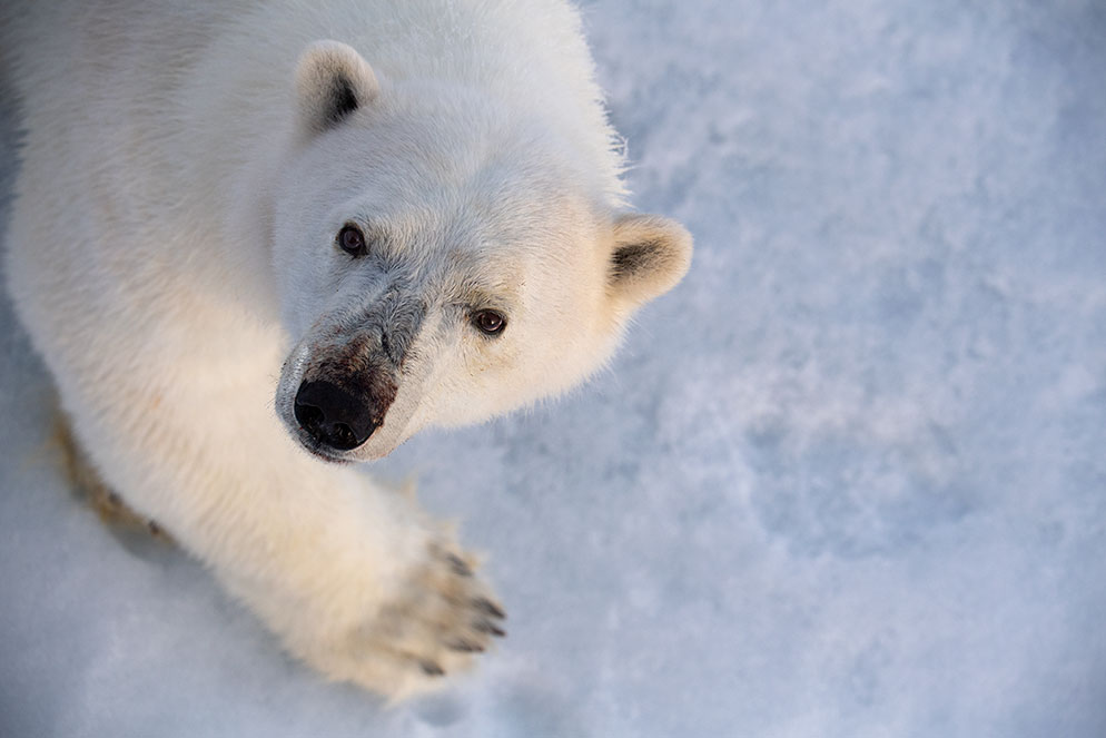Photographing Arctic Wildlife from Nikon