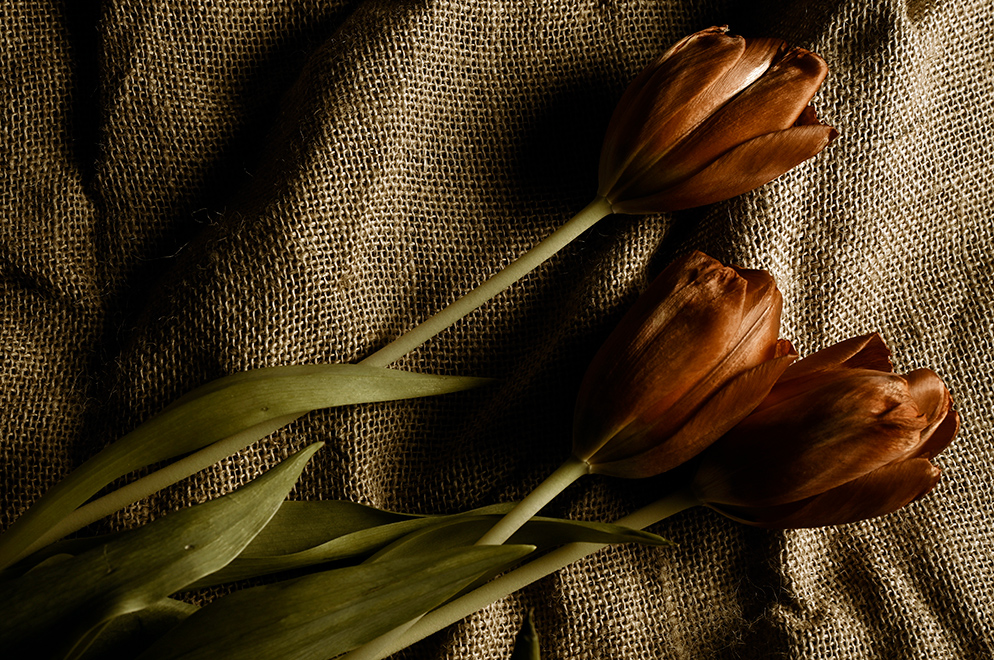 Paul Van Allen photo of tulips on a burlap background, with Sepia picture control for desaturated look