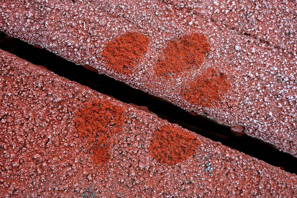 Tom Bol photo of a dog print in the frost on a redwood deck