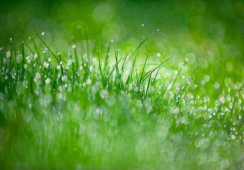 Jody Dole photo of grass with lots of bokeh