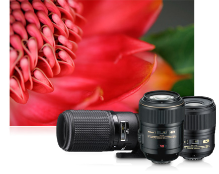 Macro lenses for close-up photos of flowers, insects, and other small objects