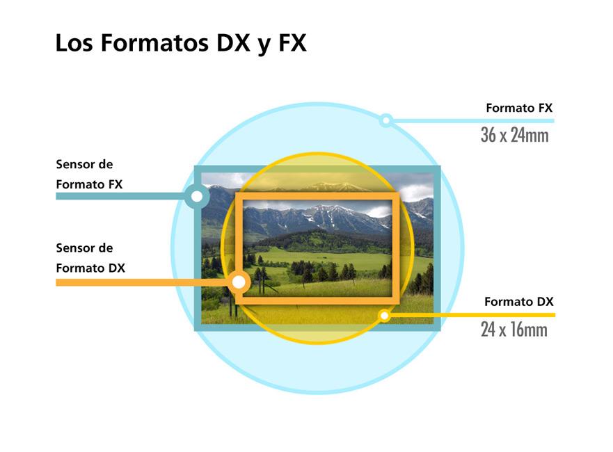 Lentes para Cámara Explicados | Lentes de Formato DX y FX de Nikon ...